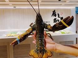 有之和牛鍋物30日強攻台中 送巨無霸波士頓龍蝦