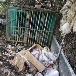沒水、沒食物 還住得像垃圾堆 毛孩飼主被罰3000