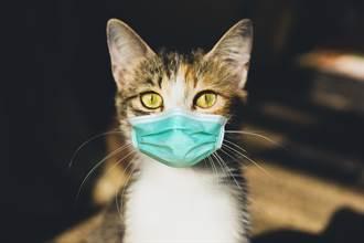 疫情衝擊、沒觀光客餵食!巴西貓島驚見「貓吃貓」飢荒慘況