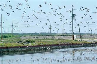 濁水溪出海口 打造環境教育場域 尋覓石虎蹤跡