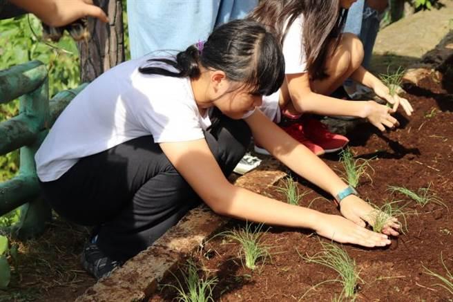 食農教育的耕種體驗活動為雙溪國小校長為學生安排的特殊教育活動,旨在透過食農教育與其勞動體驗,讓學童體會農夫的辛苦並學會知足。(銘傳大學提供)