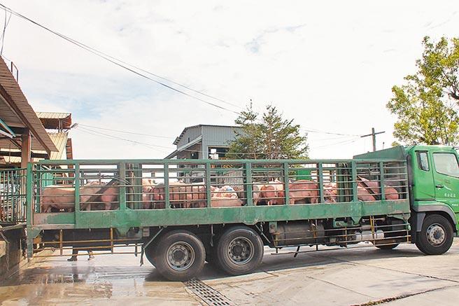 台中北屯肉品市場將轉型,彰化縣每日吸收千頭屠宰量,溪湖肉品市場除了自籌增設1條屠宰專線,彰縣府更爭取匡列百億養豬基金,提升屠宰設備和冷鏈環境,強化彰化鮮豬肉供應的品質。(吳敏菁攝)