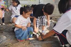 食農課經驗傳承  官小六年級學童教幼兒園小朋友種草莓