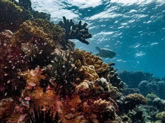 120年來首見 澳洲海域驚現「巨大珊瑚礁」:跟101一樣高