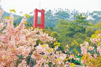 在台灣當一隻小鳥 畢竟是幸福的