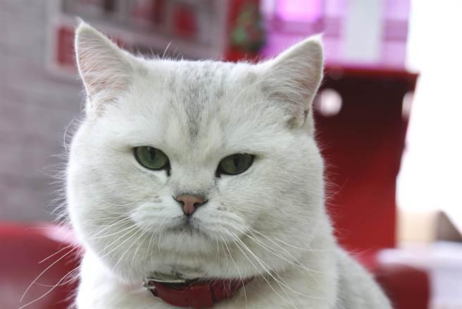 鄰居貼畫像「誰家貓掉了?」網一看本尊狂讚神還原(示意圖/達志影像)