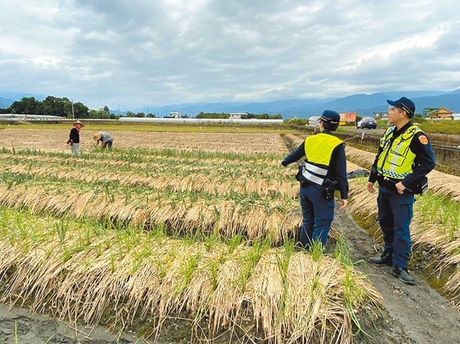 宜蘭縣三星蔥價揚,傳出有蔥農種植的青蔥遭竊,警方除到場了解外,也啟動護蔥專案。(警方提供/李忠一宜蘭傳真)