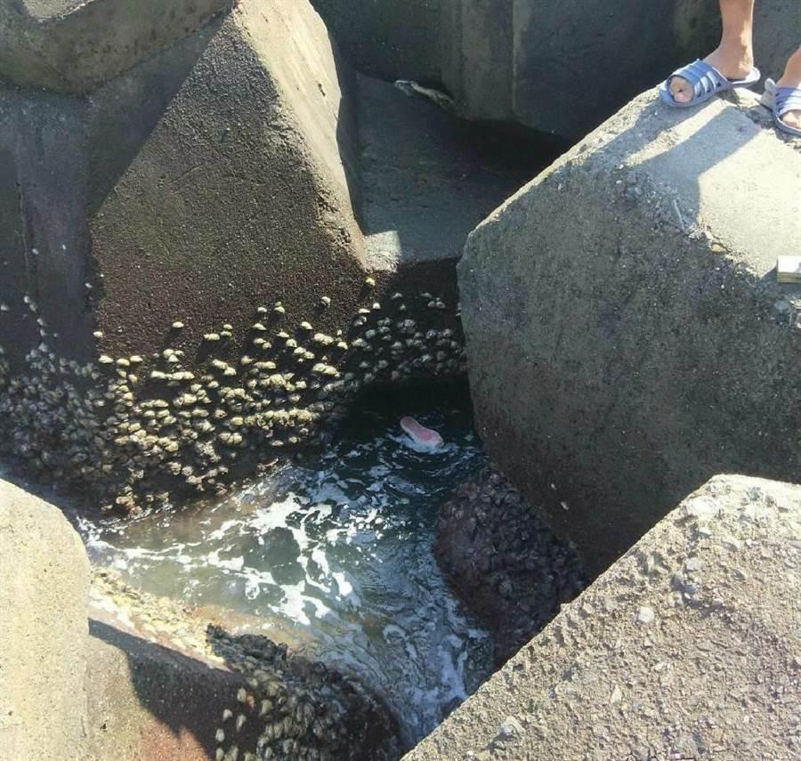 民眾27日在興達漁港北堤堤防外消波塊發現浮屍,通報海巡署第6巡防區指揮部前往處理。(海巡署第11岸巡隊提供/林瑞益高雄傳真)