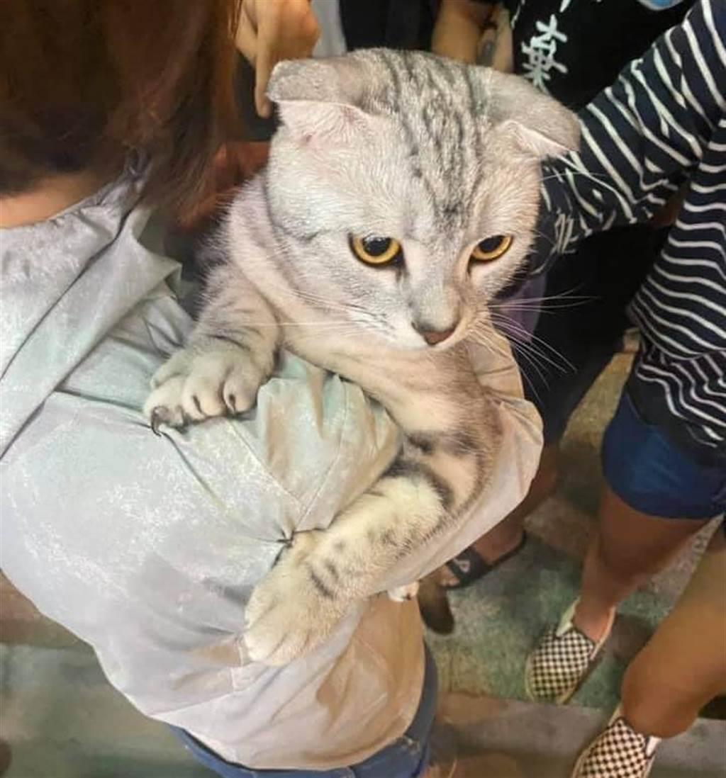 男大生虐貓引眾怒臉書遭灌爆 亞洲大學:最重可開除學籍(圖翻攝自FB/貓咪也瘋狂俱樂部 CrazyCat club)