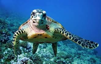 2020最搞笑動物照片出爐 海龜火大比中指奪冠