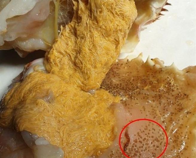 老饕表示,黃色條狀部分其實是蟹膏,旁邊的一堆卵才是蟲。(圖/截自爆廢1公社)