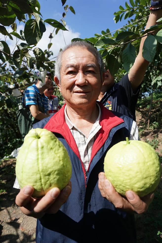 台中市和平區果樹產銷班70班班長李永振率先在摩天嶺種植芭樂。(王文吉攝)