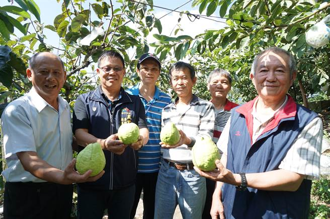 和平區農會總幹事李順冬(左一)等大力推薦摩天嶺芭樂。(王文吉攝)