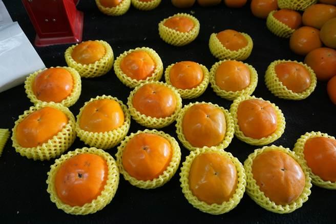 台中市和平區摩天嶺「花御所」甜柿已經上市。(王文吉攝)
