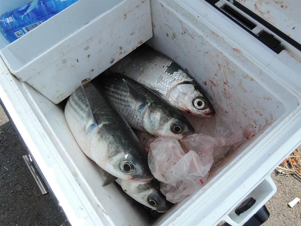 嘉義縣東石鄉港墘排水堤岸釣況極佳,有機會釣到野生烏魚、虱目魚等魚種。(張毓翎攝)
