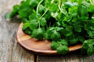 香菜整腸健胃促消化 煮水喝還能助排毒? 醫師解惑