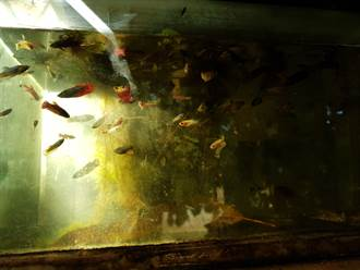 廢棄樂園水箱驚見巨型魚尾 燈一關「5米大白鯊」現形
