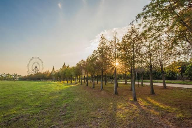千棵落羽松林綿延長達1公里,搭配天空之夢當背景,形成秋冬最夢幻浪漫美景。(麗寶Outlet Mall提供/陳淑娥台中傳真)
