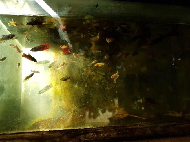廢棄的動物樂園中,竟看到一隻「大白鯊」被遺留在水缸中(示意圖/達志影像)