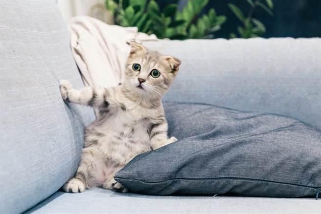 在忙碌生活中許多人會傾向於養寵物來陪伴自己。(取自網路)
