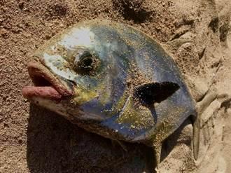 拉起魚網被哀怨皺眉「人面魚」凝視 漁民發毛不敢吃