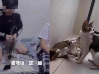 中華大學3男拋接虐貓被約談 承諾交貓卻反悔「要繼續養」