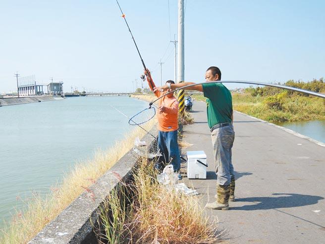 嘉義縣東石鄉港墘排水堤岸釣況極佳,是釣客之間流傳的私房釣點。(張毓翎攝)