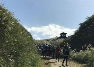 2020草嶺古道芒花季 11月7日起跑