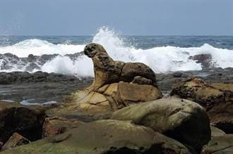 基隆鳥會守護文化資產 海豹岩計畫獲綠獎