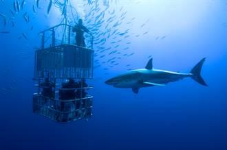 鐵籠潛水遇5米大白鯊「衝撞啃咬」 驚險瞬間專家嚇:非常罕見