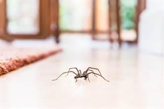 衣櫃邊驚見長腿大蜘蛛 男拿筆猛戳手狂抖結局逆轉