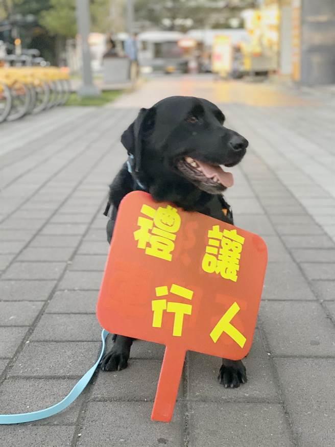 「台中國際舞蹈嘉年華」活動盛大展開,卡哇依警犬成為最搶眼警力。(警方提供/陳淑芬台中傳真)