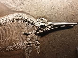 7歲男童海邊發現詭異石頭 竟是2.5億年前魚龍化石