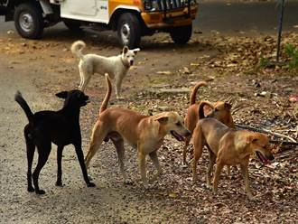 山上迷路驚遇「神秘狗組織」 老大霸氣下令小弟神救援