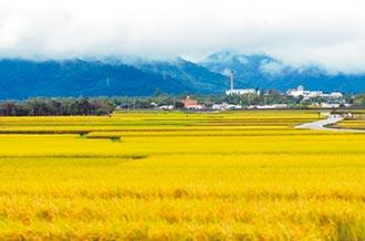 能源政策面面觀》不種稻只種電 終結池上美景