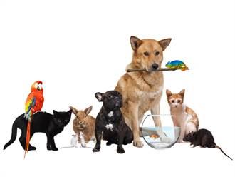 哪種寵物最好養?網中肯推1生物:多子多孫多福氣