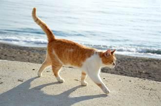 橘貓初次看海興奮狂踩沙灘 下秒突變臭臉原因太爆笑