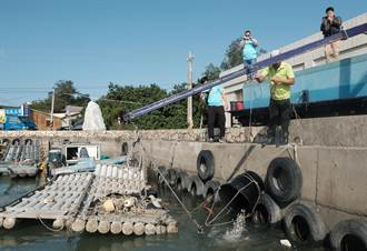新豐放流20萬尾魚苗 提升近海漁業資源