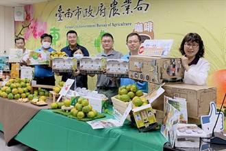 台南東山青皮椪柑產期到 南市多通路促銷