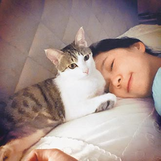 六月出示17萬帳單撇棄養貓咪