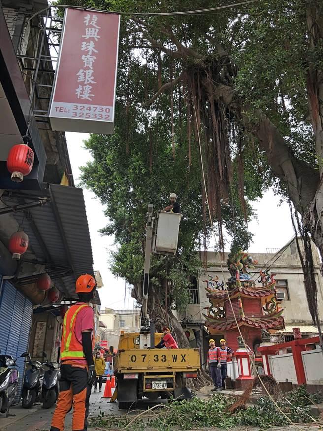 台灣專業團隊在城區執行老樹修剪工作,圖為今天現場所在的后浦內武廟。(李金生攝)
