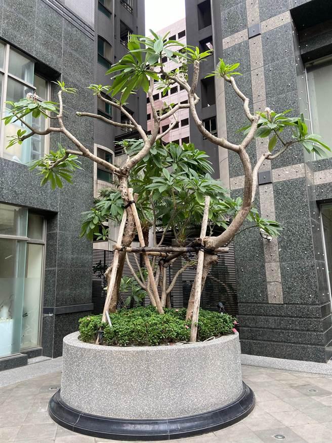 住戶合力妝點社區公共空間,注入新的綠能與文化內涵。(盧金足攝)