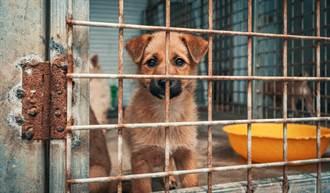 流浪狗闖民宅被關進收容所 半年無人領養鬥牛犬卻笑了