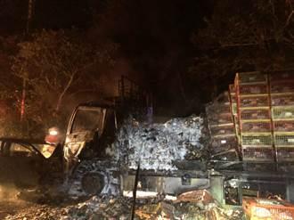 汽車逆向撞大貨車炸成火球 上百隻活雞瞬間成「烤雞」