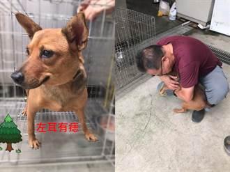 黃狗被嚇落跑走失1個月 靠1顆痣重逢主人「鑽懷裡抱抱」
