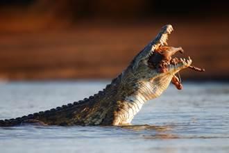 爬水管渡河遇鱷魚攔截 工人慘遭撕扯「吃到只剩半身」