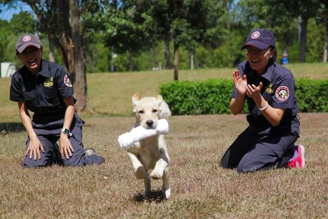 緝毒犬訓練圖。圖/關務署提供