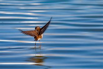 無助小鳥泡11度海水拍翅求生 霸氣船長下秒神救援