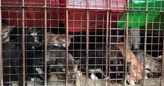 詐領動物醫療補助1/浮報流浪貓醫藥費吸金 知名愛媽「盛珊珊」年詐近百萬