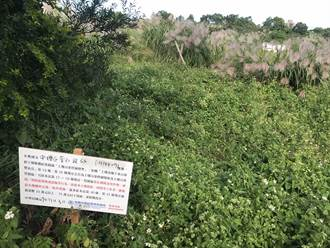 中壢普仁段農地2年前受鎘汙染 明年1月進場整治